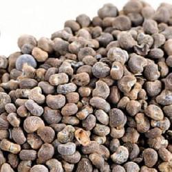 GÉLULES  d' Ambrette (semence) BIO 220 mg