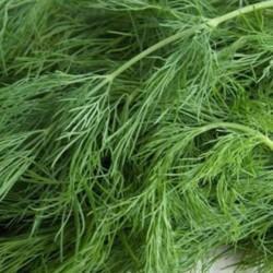 Gélules d' Aneth (semence) BIO 250 mg