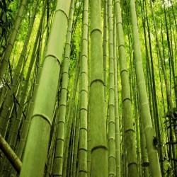 GÉLULES de Bambou BIO 320 mg