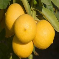 ELIXIR FLORAL de  Bergamote 100 ml