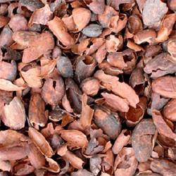GÉLULES de Cacao fève 250 mg