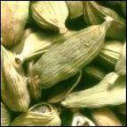 Poudre de Plante médicinale de Cardamone (fruit), Anomum cardamom