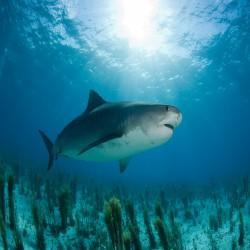 GÉLULES de Cartilage de requin 400 mg