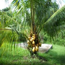 HUILE VÉGÉTALE de Noix de coco fractionnée