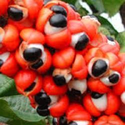 GELULES de Guarana 300 mg
