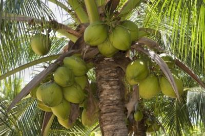 HUILE VÉGÉTALE de Noix de coco vierge