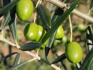 HUILE VÉGÉTALE de D'olive